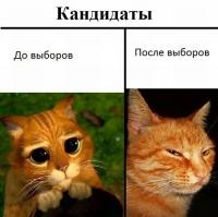 fotopodborka_sredy_88_foto_2